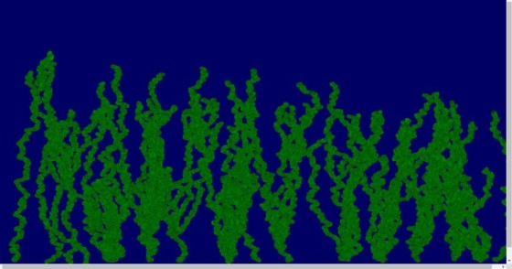 bugs_seaweed (Small)